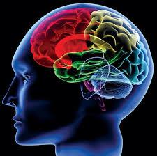 脳は否定語を理解できない